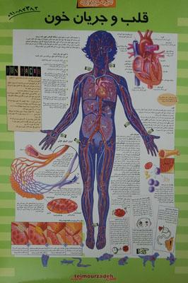 پوستر-قلب-و-جريان-خون