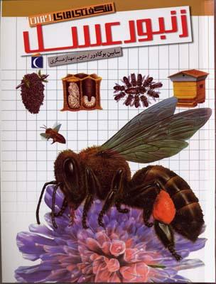 شگفتي-هاي-جهان(زنبور-عسل)
