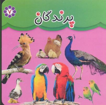 مقوايي-7-پرندگان