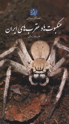 عنكبوت-ها-و-عقرب-هاي-ايران