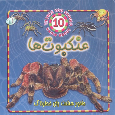 -با-10-نوع-از-عنكبوت-ها-آشنا-شويد