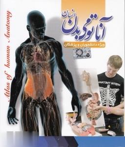 آناتومي بدن انسان