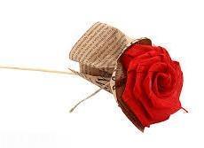گل كاغذي تك سميرا