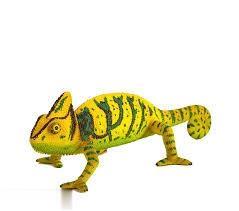 Chameleon 387129