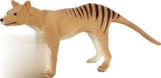 Tasmanian Tiger 387161
