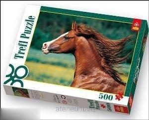 اسب عربي 37077
