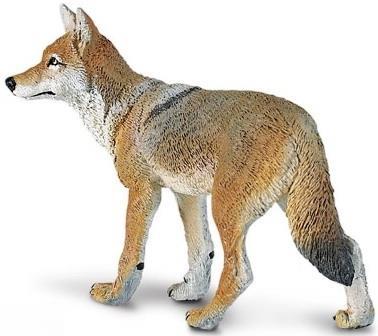 Coyote 227229