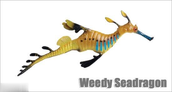Weedy Seadragon 252629