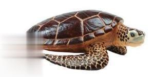 Sea Turtle 260429
