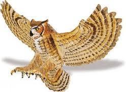 Great Horned Owl 264429
