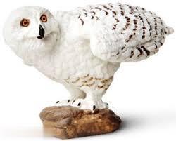 Snowy Owl 264729