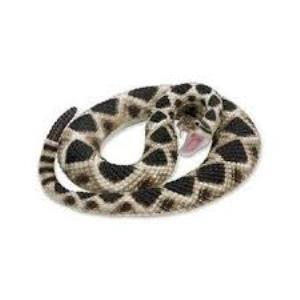 Rattlesnake 269329