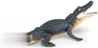 Aligator 276429