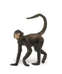 Spider Monkey 291629