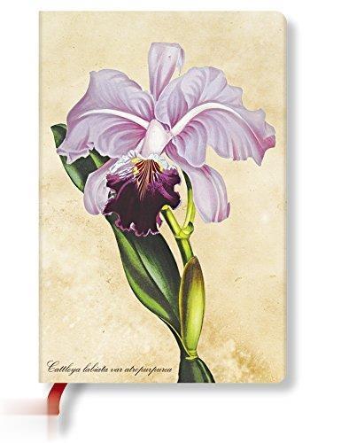 Brazilian Orchid Mini 25