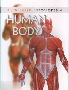 Human Body 6446
